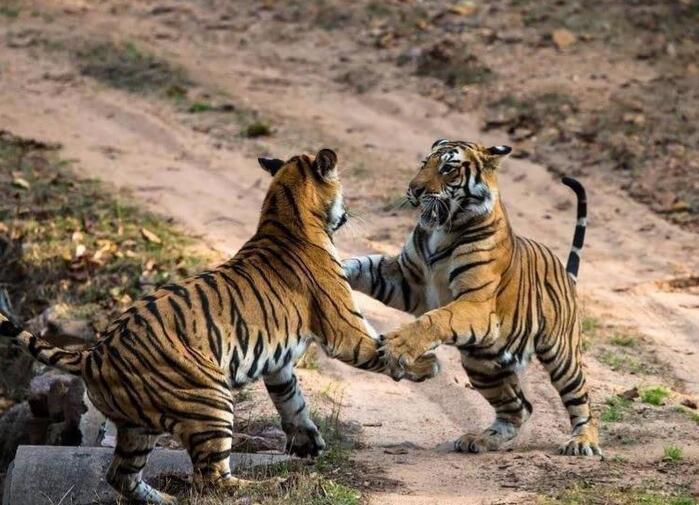 宁波老虎咬人动物园明天闭园